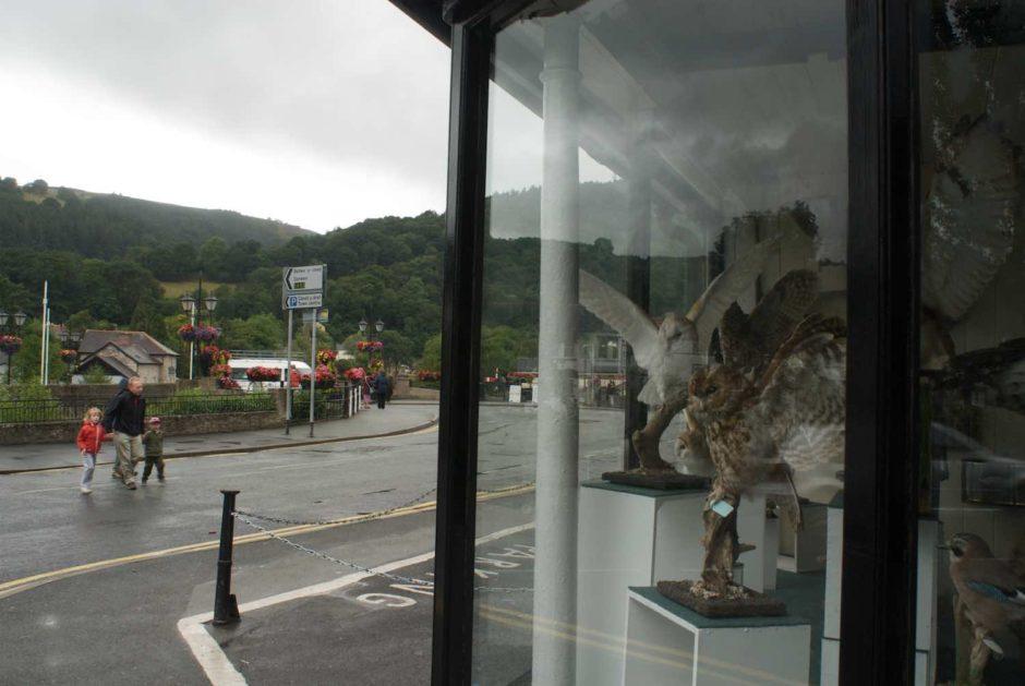 Kleurfoto van de etalage van een taxidermist in Llangollen, Wales