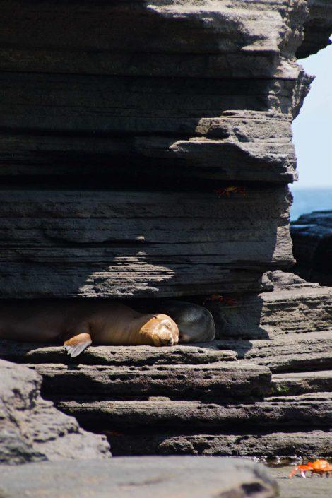 Kleurfoto van een in de schaduw slapende zeeleeuw