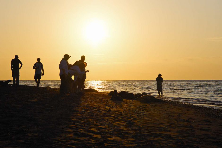Kleurfoto van een zeeleeuwenkolonie fotograferen bij een laag staande zon