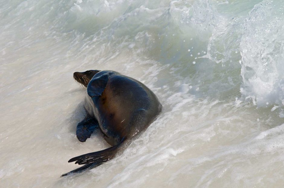 Kleurfoto van een genietende zeeleeuw